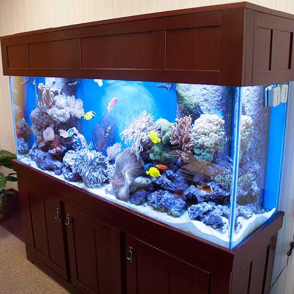 Aquarium Livestock