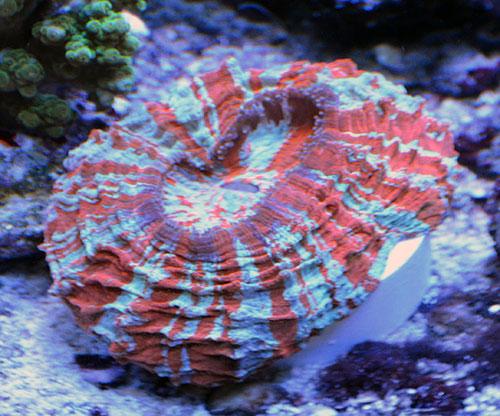 Something Fishy Aquarium Livestock Corals Amp Frags