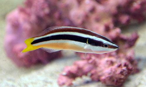 Something Fishy Aquarium Livestock Fish Wandering