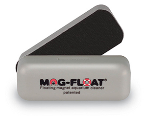 Algae Magnets