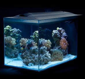 Fluval Sea Evo 12-Gallon Aquarium Kit with LED Light *IN-STOCK NOW!