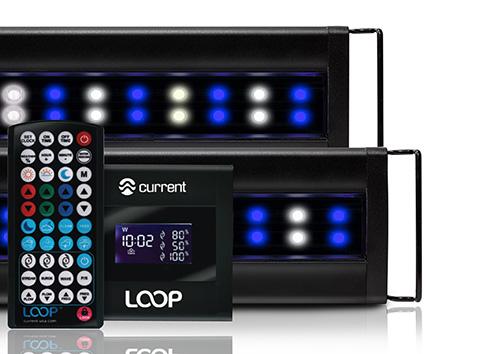 Current Orbit Marine IC PRO LOOP LED System with Controller, 48 - 60""