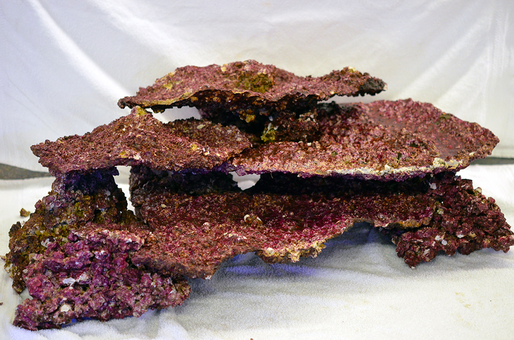 REAL REEF Shelf Live Rock *CURED*