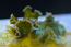 Lettuce Slug