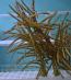 Assorted Gorgonians