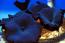 Assorted Mushroom Rocks