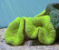 Lime Green Carpet Anemone