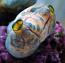 Monkey Sea Squirt