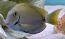 Ocean Tang