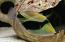 Rectangle Huma Trigger, Small