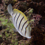 Convict Tang, Small