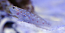 Tangaroa Shrimp Goby