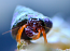 Orange Polka Dot Hermit Crab