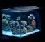 Fluval Sea Evo 12-Gallon Aquarium Kit with LED Light *IN-STOCK NOW!