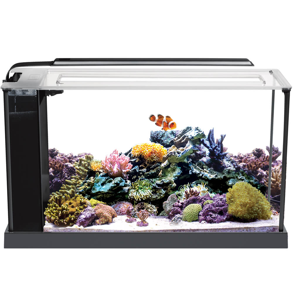 Fluval Sea Evo 5-Gallon Aquarium Kit with LED Light