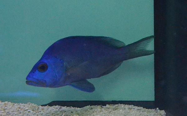 Blue Hamlet